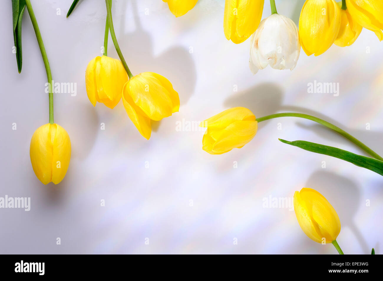 Beauty Bouqet Easter Flowers Petals Tulips Yellow Anniversary