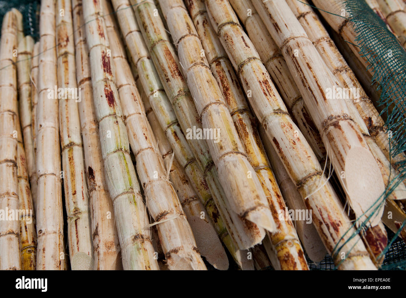 Cut sugarcane stems - Stock Image
