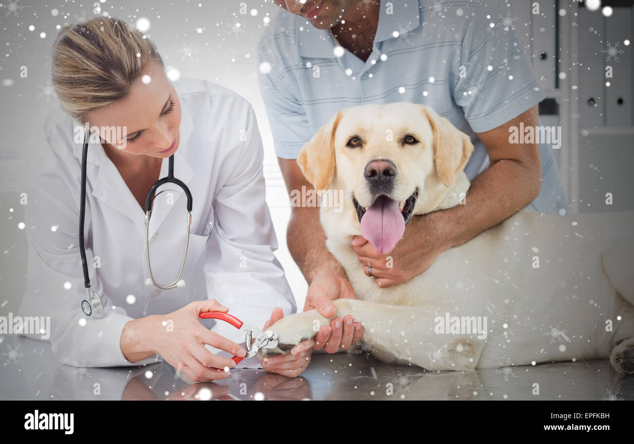 Dog getting claws trimmed by female vet - Stock Image