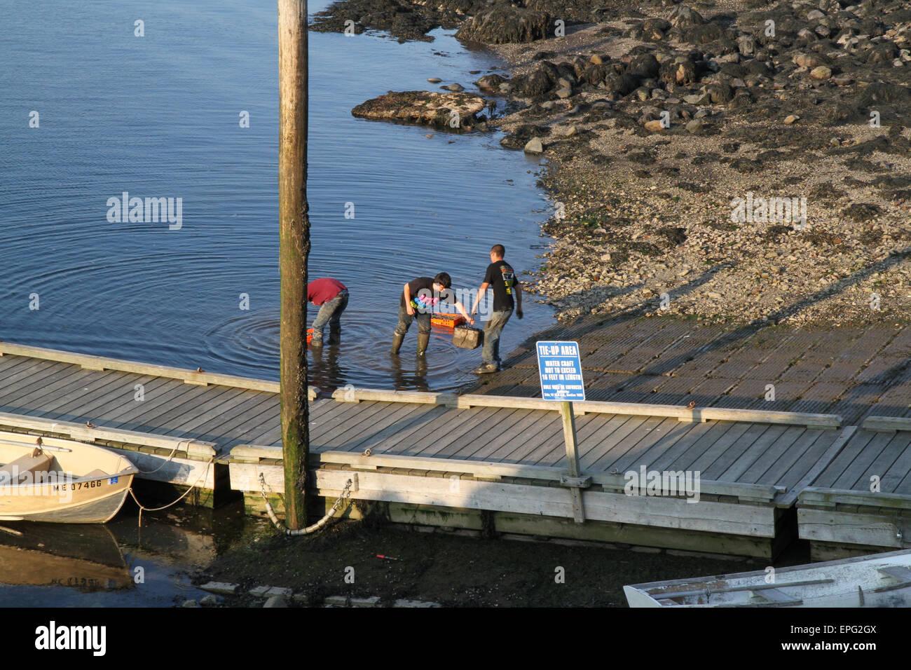 Collecting and rinsing shellfish - Stock Image