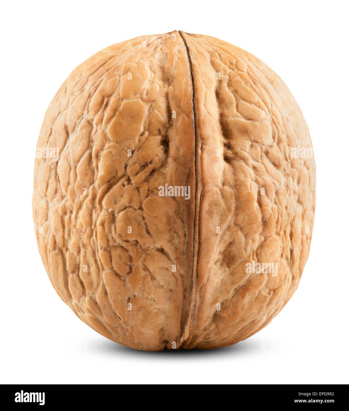 Single walnut - Stock Image