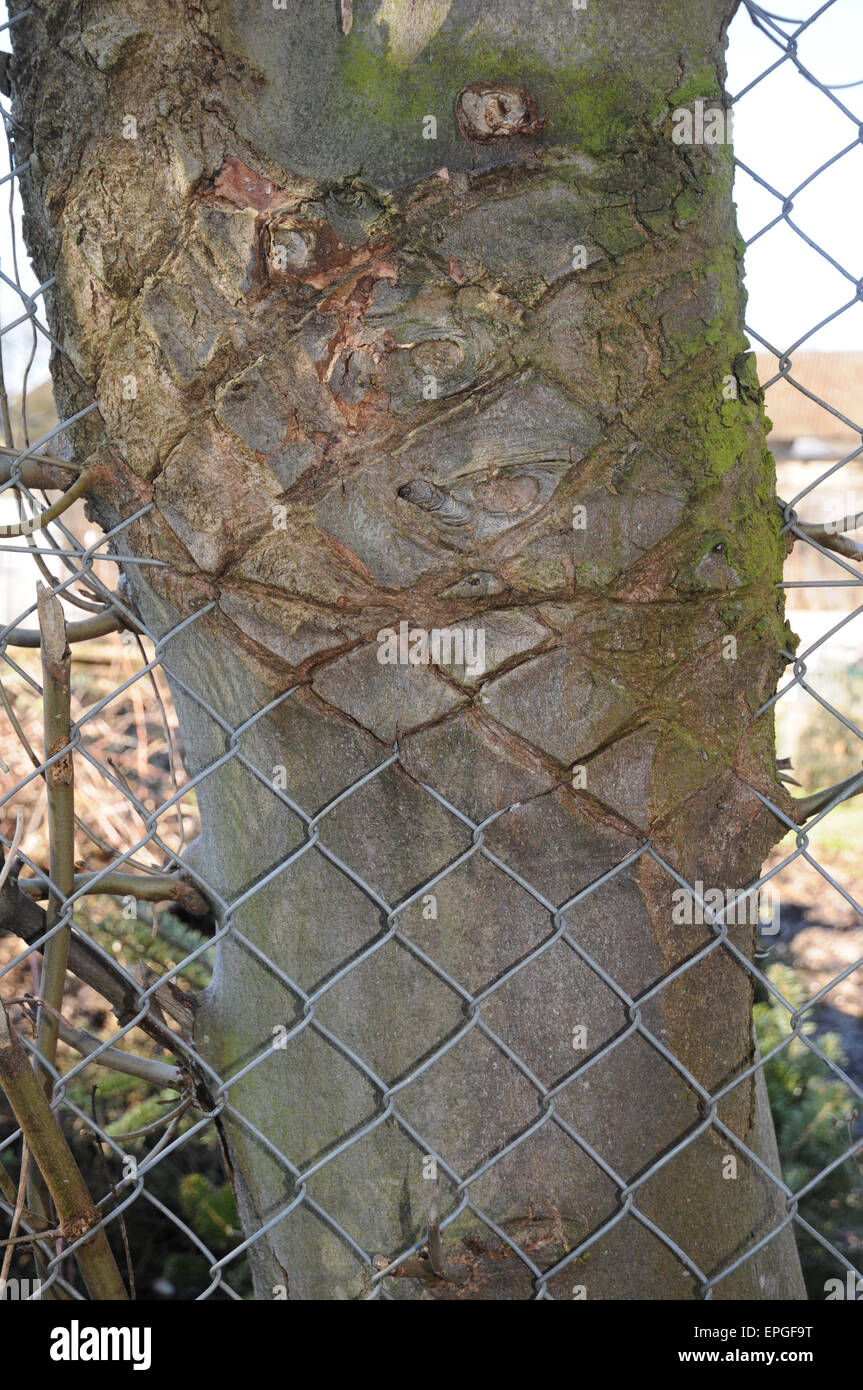 Wire-fence in the bark Stock Photo