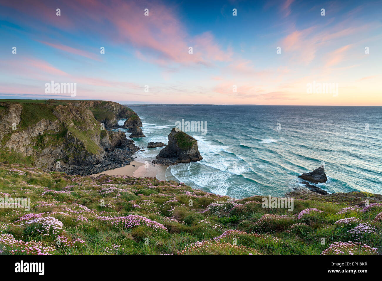 Sunset over clumps of flowering Sea Thrift growing on cliffs above Bedruthan Steps - Stock Image