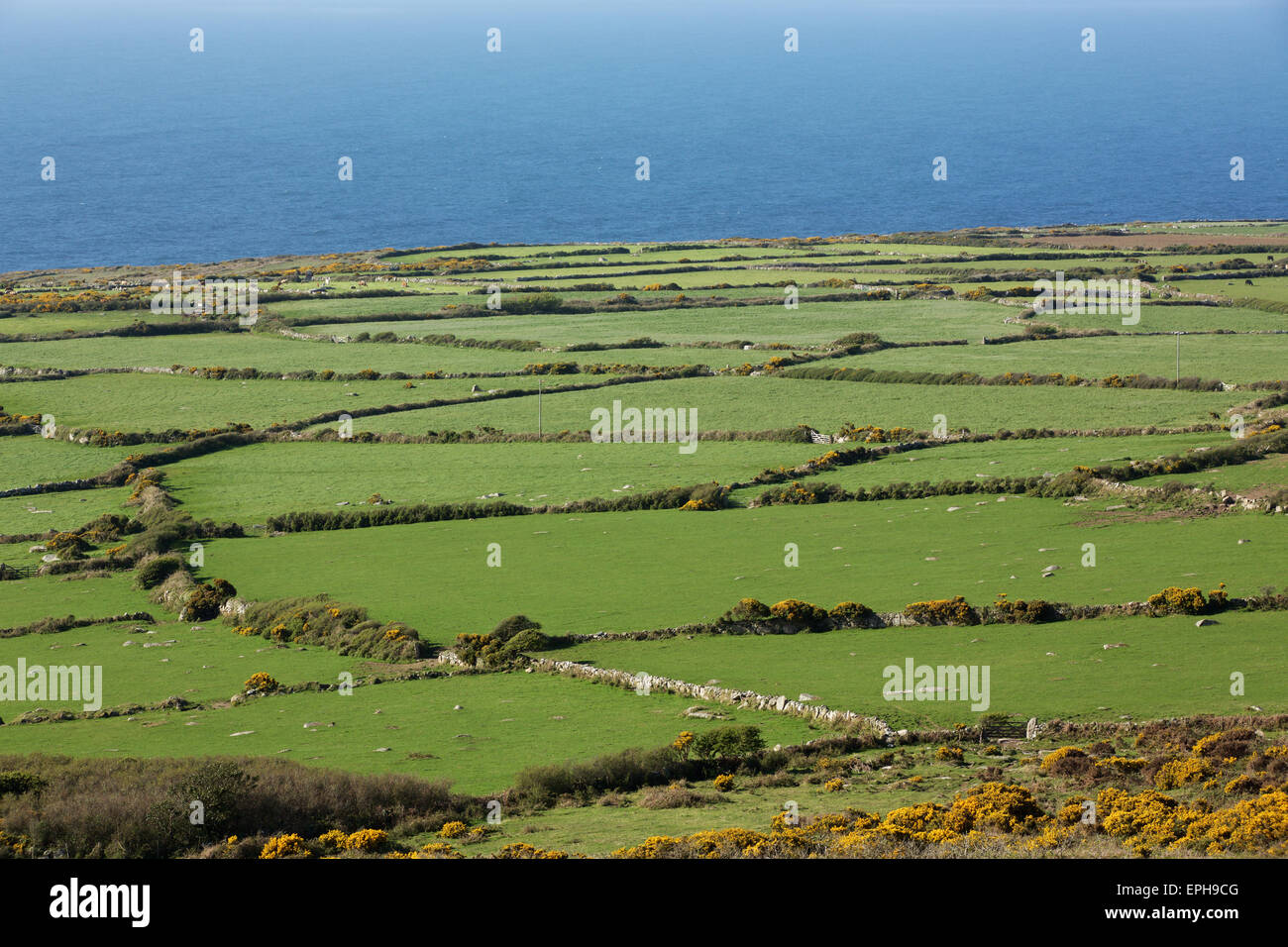 Aerial landscape view of the Cornish coast showing a patchwork of fields with drystone wall edges - Stock Image