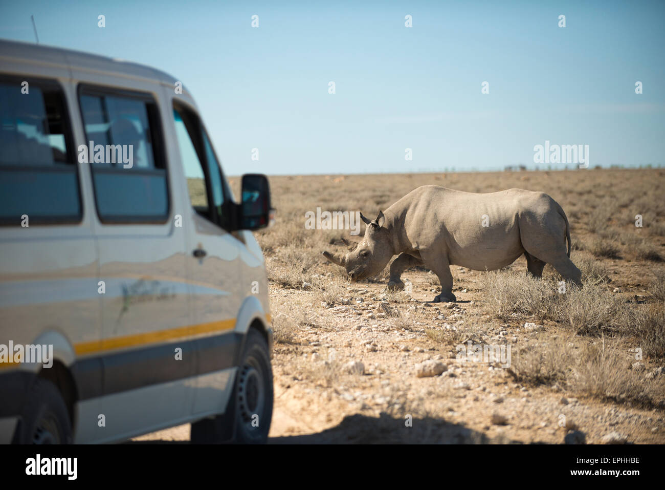 Africa, Namibia. Tour guide van parked infront of rhinoceros. Etosha National Park. - Stock Image
