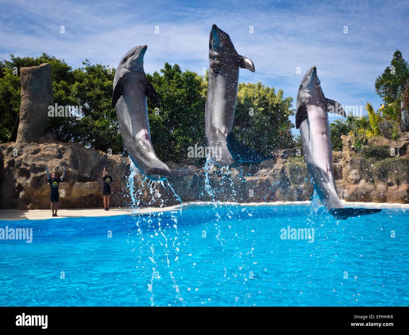 Delfine im Loro Park in Puerto de la Cruz - Stock Image