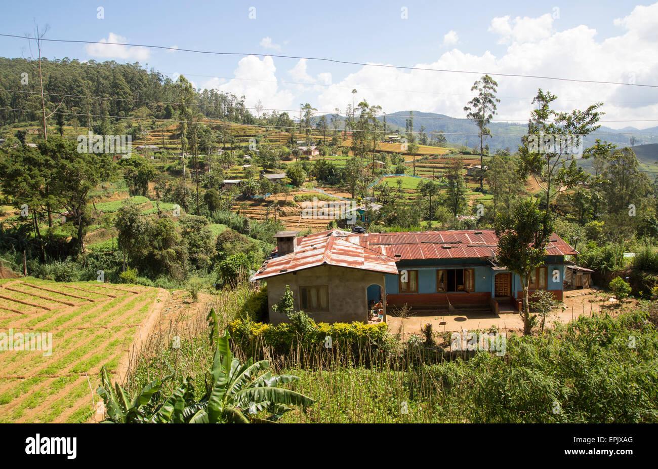 Intensive subsistence vegetable farming near Nuwara Eliya, Sri Lanka, Asia - Stock Image