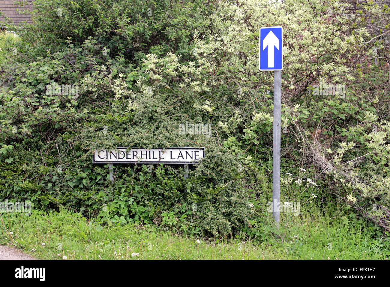 Cinder hill Lane Scholar Green. A narrow country lane in Cheshire. This road is a bit steep and windy so one way - Stock Image