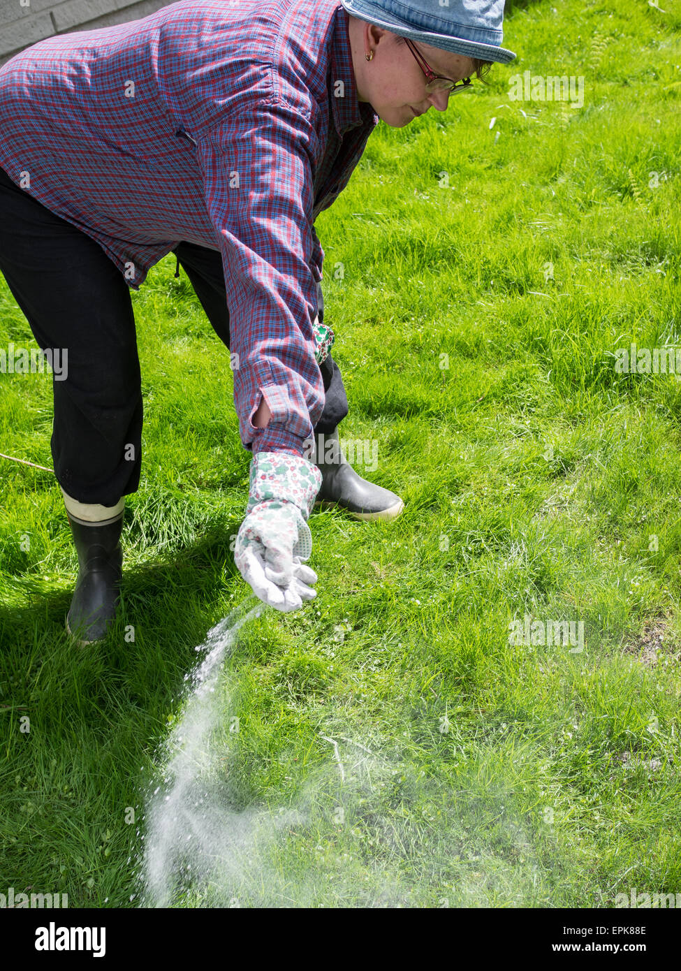 Woman take care of the lawn and fertilize - Stock Image