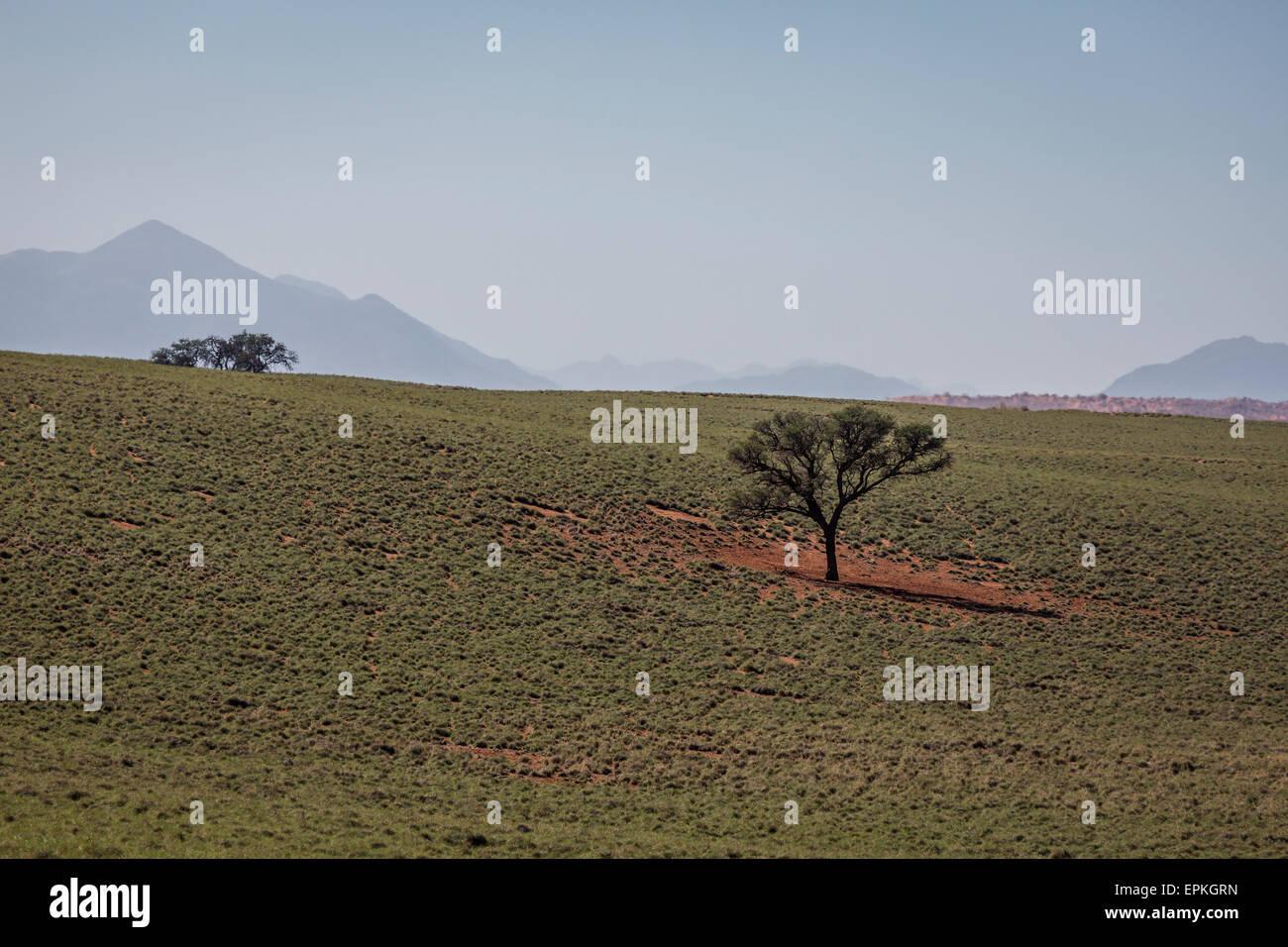 Trees, Okonjima, Namibia, Africa - Stock Image