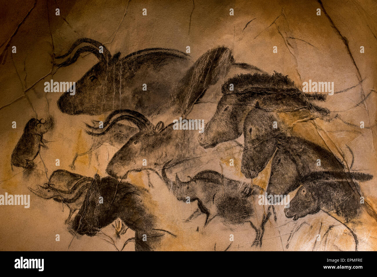 Replica of prehistoric rock paintings of the Chauvet Cave, Ardèche, France, showing woolly rhinoceros, aurochs - Stock Image