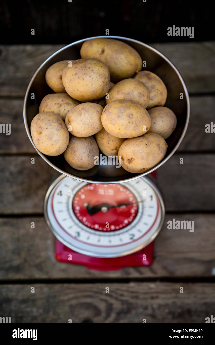 Kilogram of potatoes on a kitchen scale - Stock Image