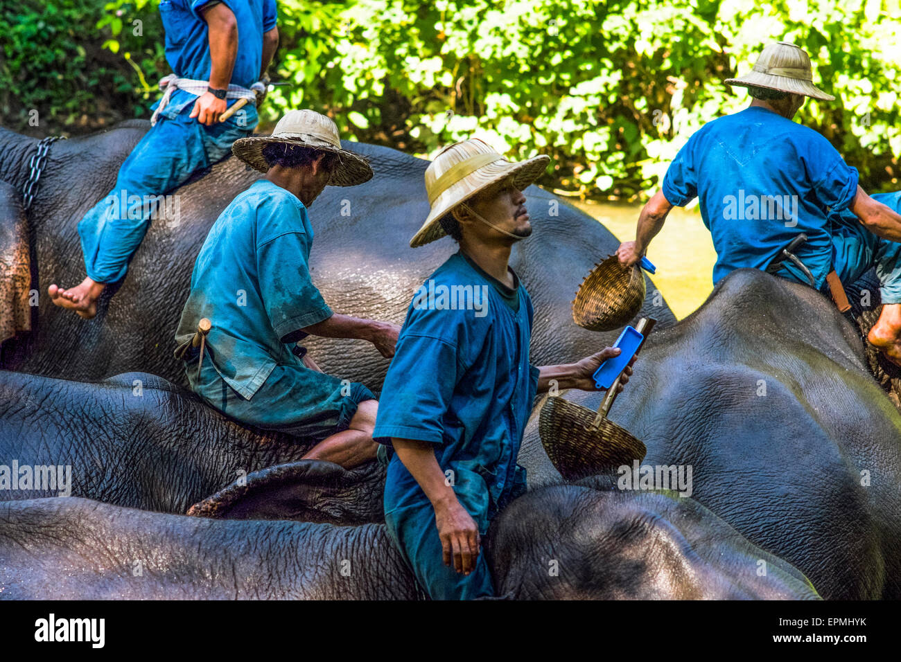 Asia. Thailand, Chiang Dao. Elephant center. Mahout and his elephant during the bath. - Stock Image
