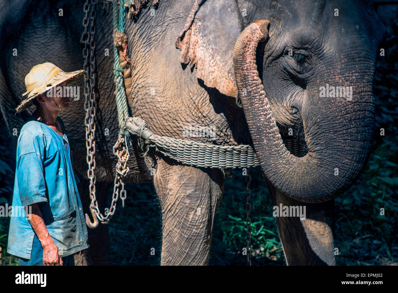 Asia. Thailand, Chiang Dao. Elephant center. Mahout and his elephant. - Stock Image