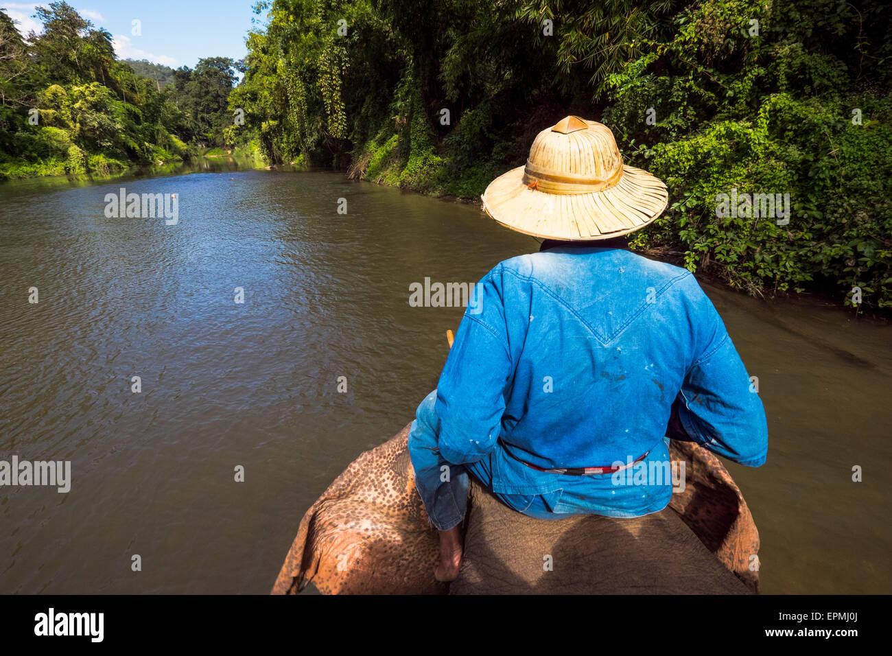 Asia. Thailand, Chiang Dao. Elephant center. Elephant trekking. - Stock Image