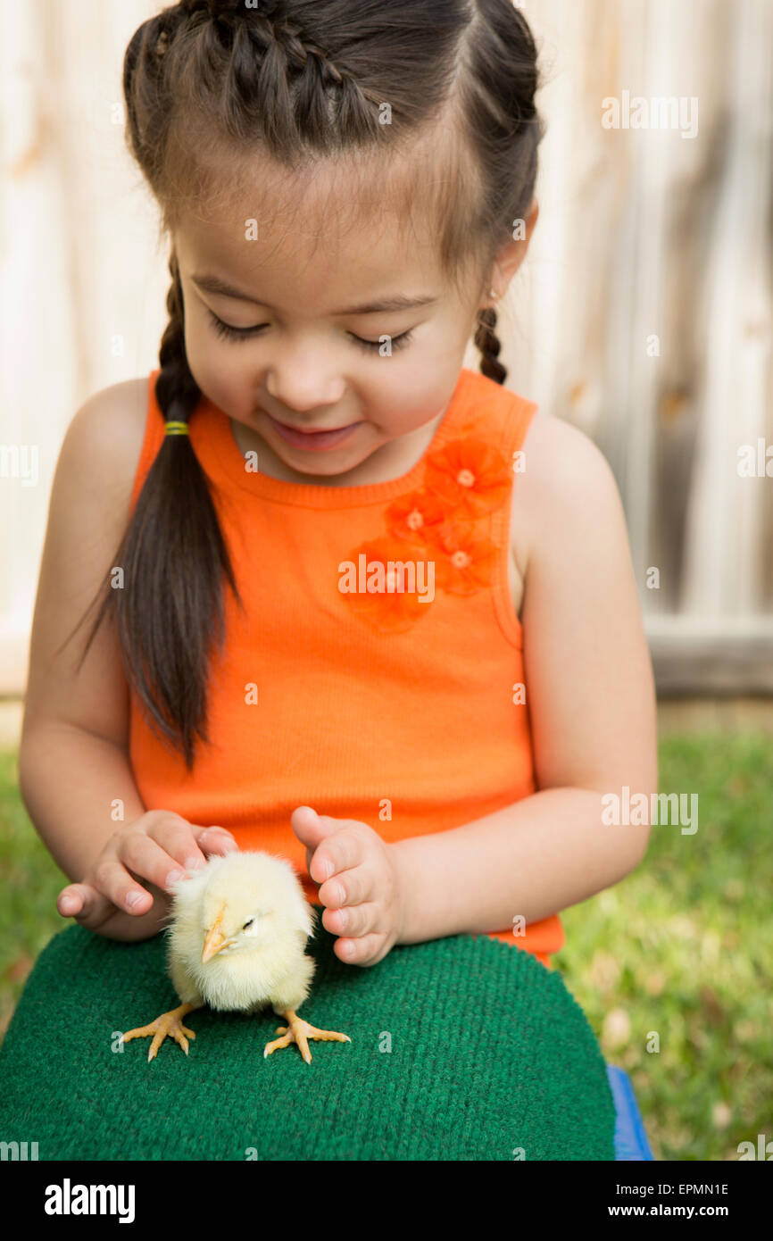 A child with a baby chick on her lap. - Stock Image