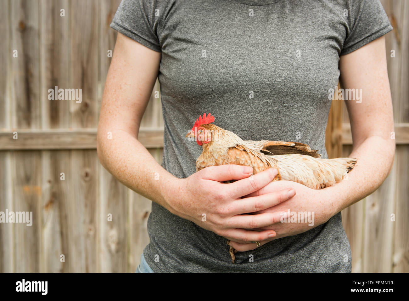 A woman holding a chicken. - Stock Image