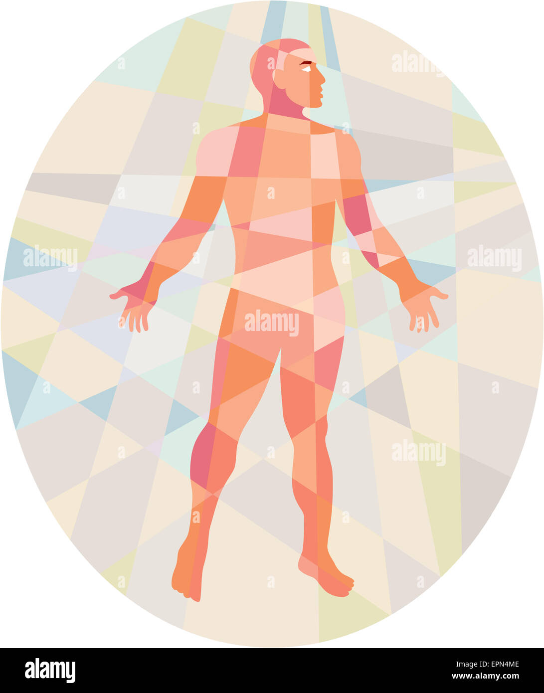 Low polygon style illustration of a gross anatomy male with hands on the side viewed from front set inside oval. - Stock Image