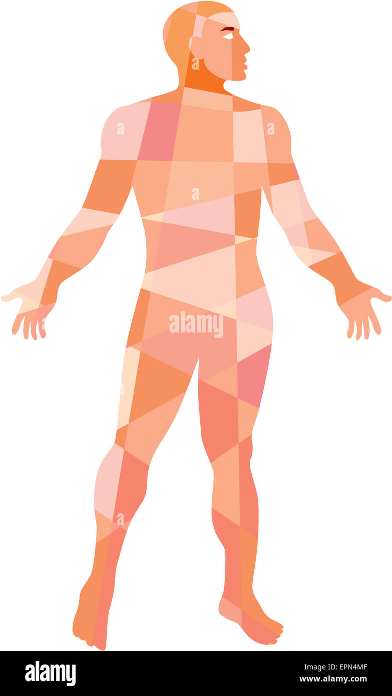 Low polygon style illustration of a gross anatomy male with hands on the side viewed from front set on isolated - Stock Image