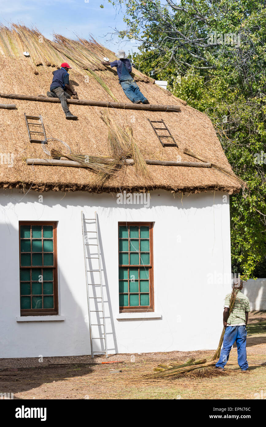 Men thatching roof of Toy Museum, Stellenbosch, Cape Winelands District, Western Cape Province, Republic of South - Stock Image