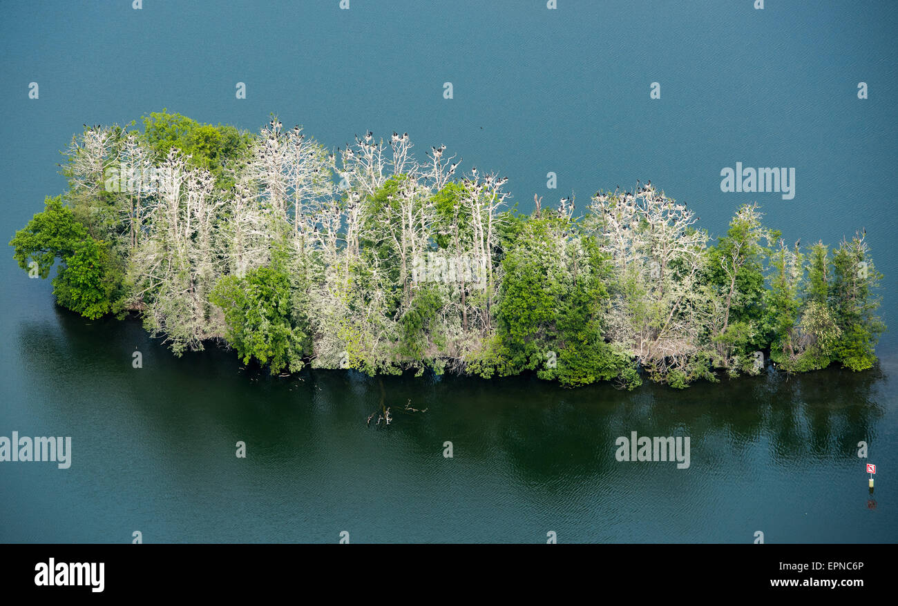 Bad Saarow, Germany. 19th May, 2015. An aerial view shows a small island on Scharmuetzelsee Lake, upon which a cormorant - Stock Image