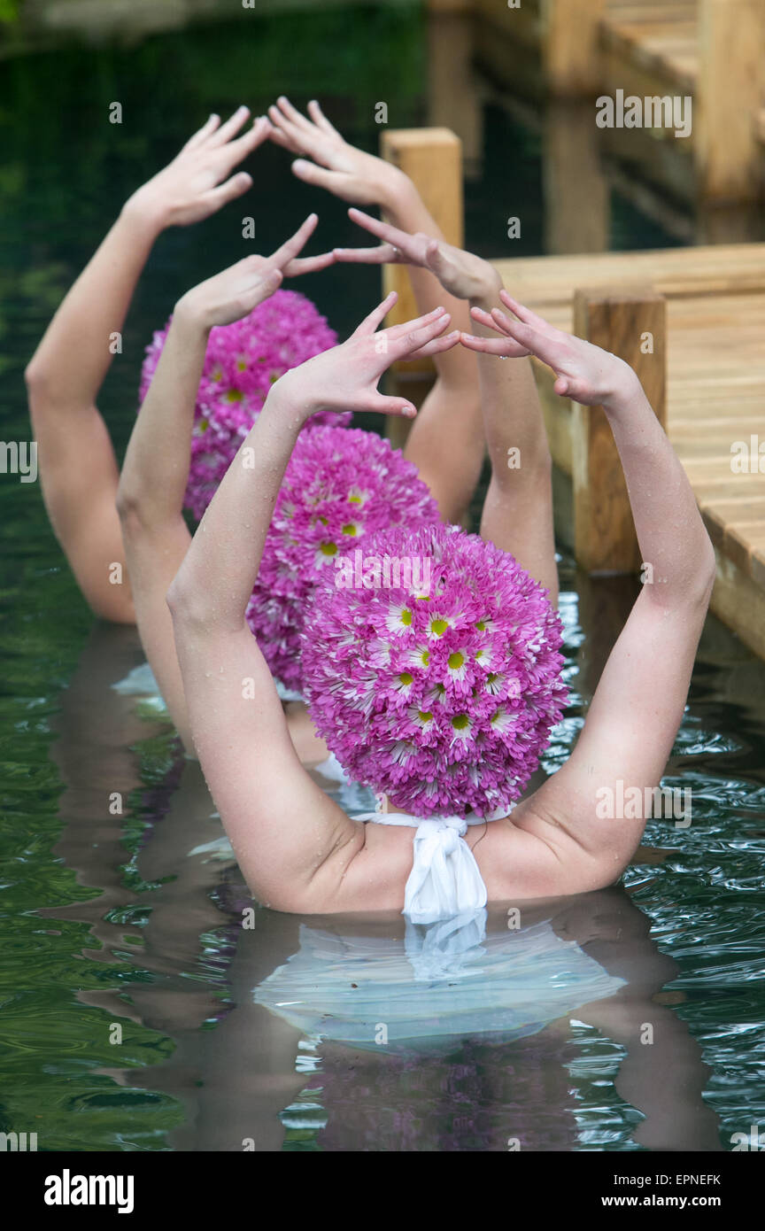 Synchronized swimmers perform at the M & G garden at the 2015 RHS Chelsea designed by Jo Thompson - Stock Image