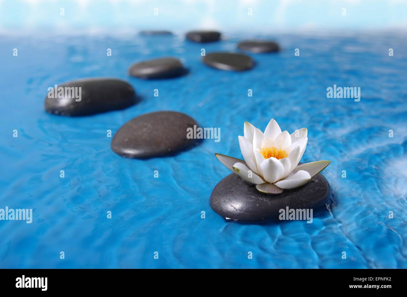 zen stones in blue water with lily - Stock Image