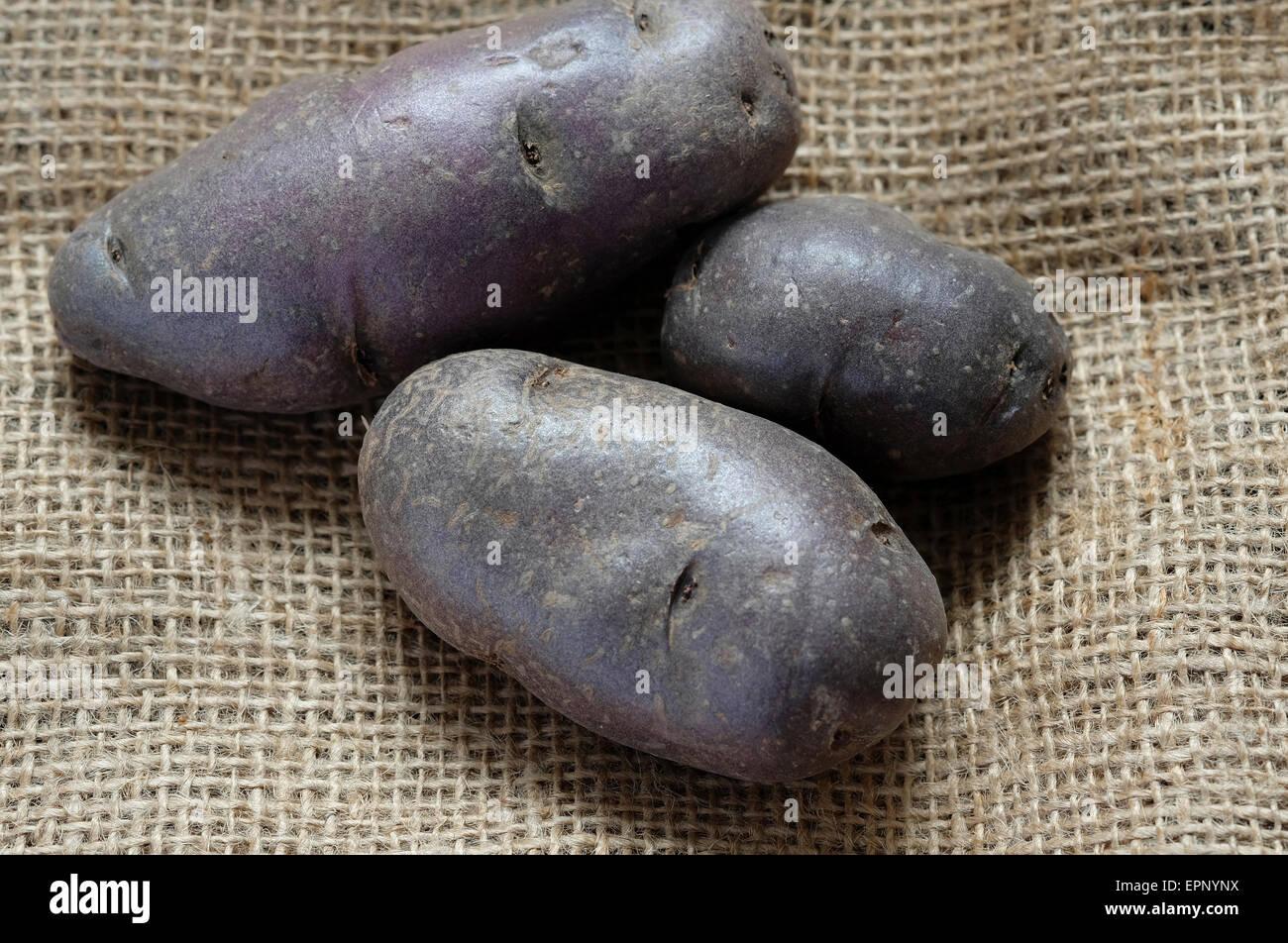 black skinned potatoes on old sack cloth - Stock Image