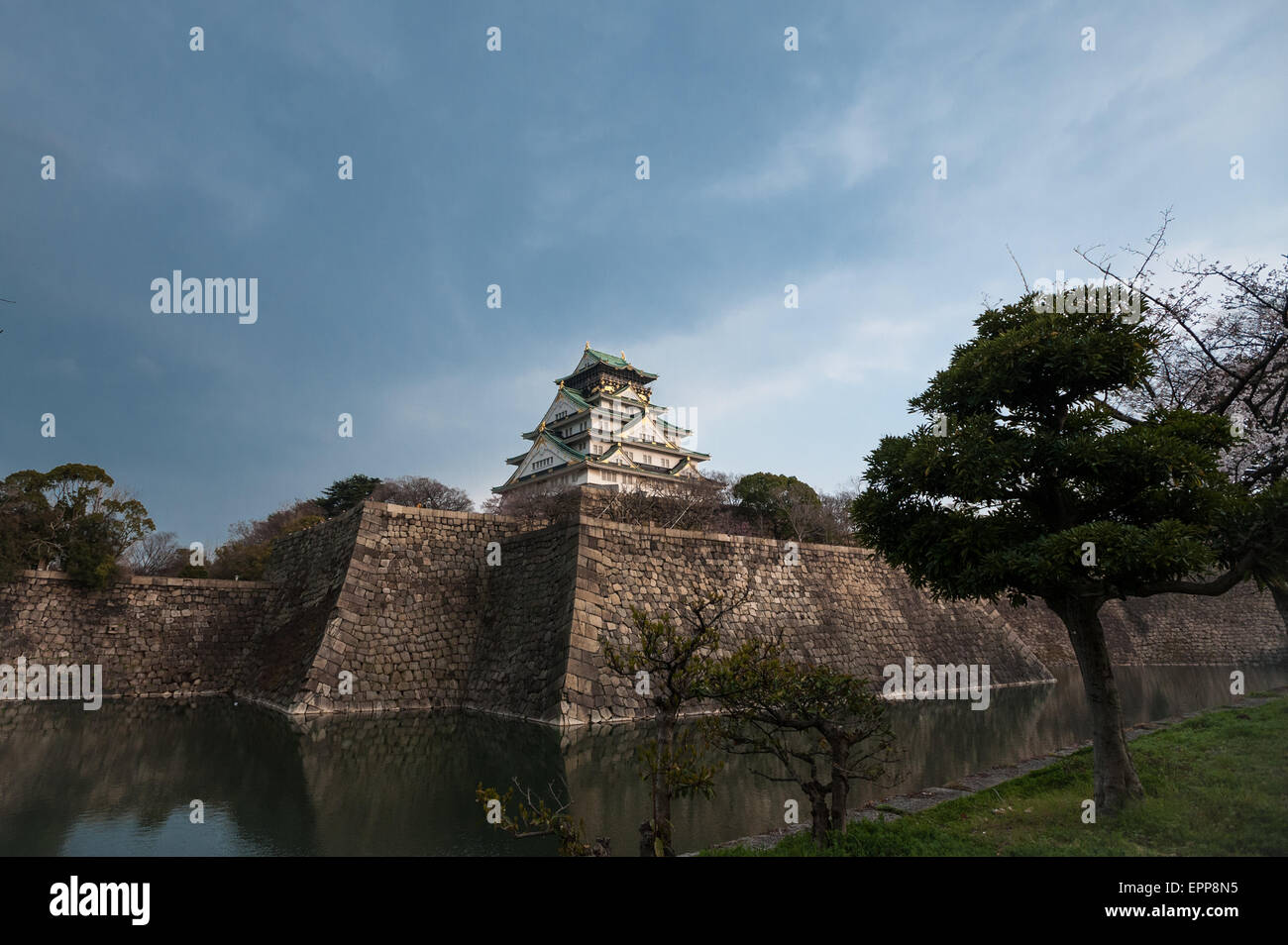 The Osaka Castle of Japan during the cherry blossom season in spring Stock Photo