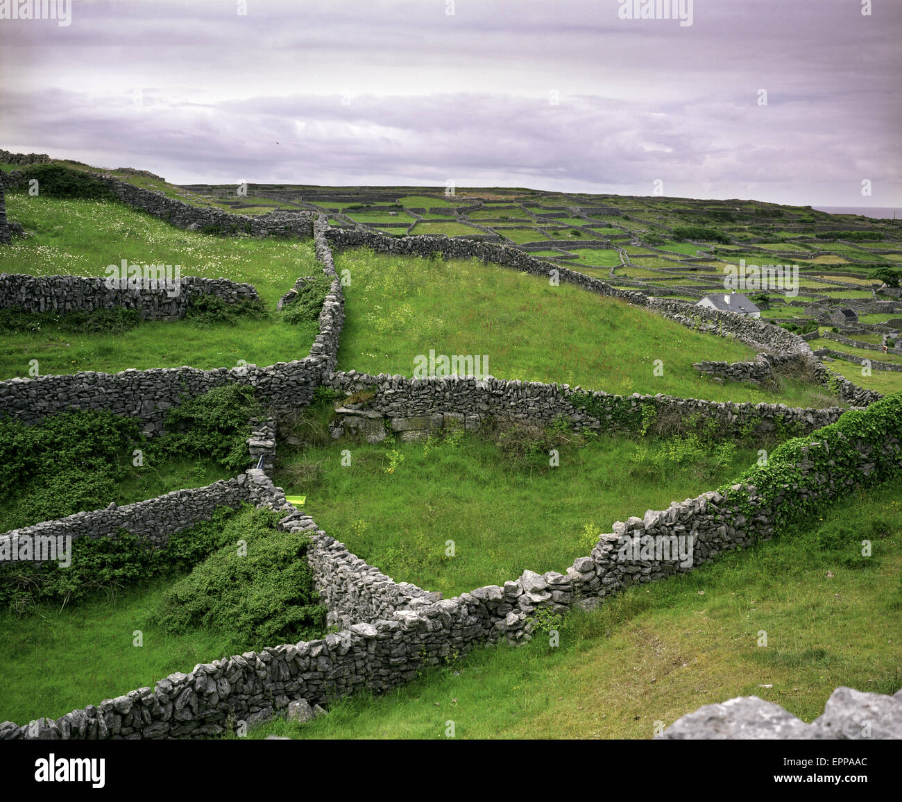 Stonewalls on the island of Inis Orr, Ireland. - Stock Image