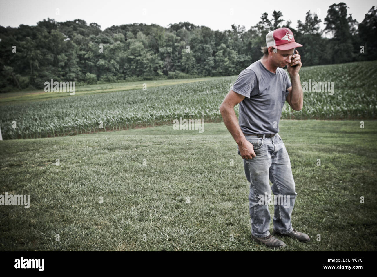 A man talks on his cell phone out in the field of their family farm in Keymar, Maryland. - Stock Image