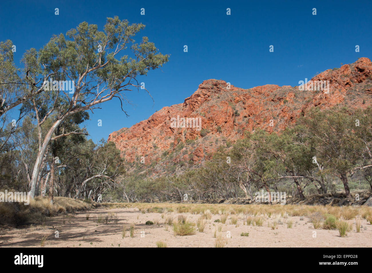 the dry riverbed of the Trephina River in Trephina Gorge during a drought, MacDonnell Ranges, Australia - Stock Image