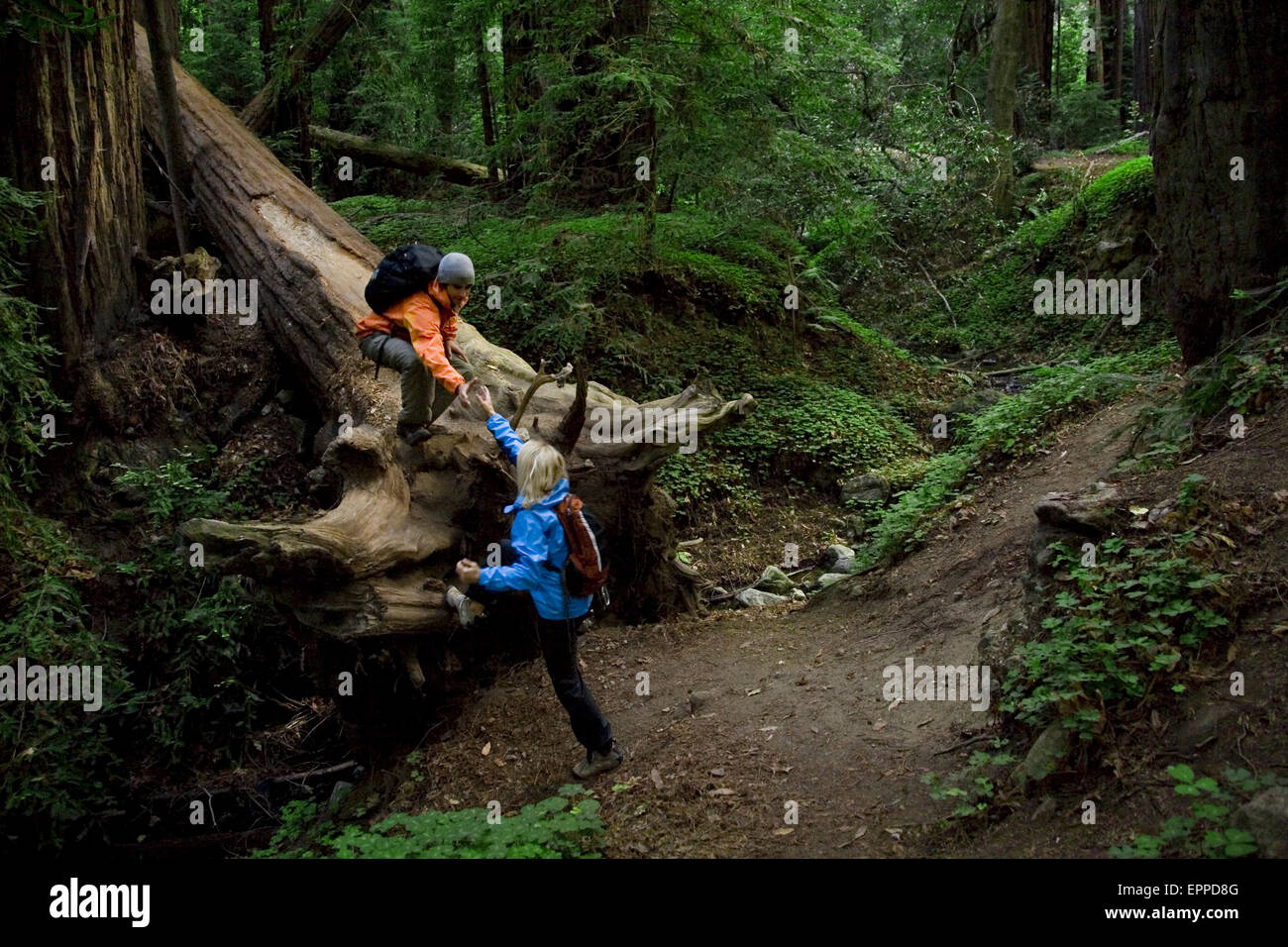 Couple hiking in the redwood forests of Big Sur. - Stock Image