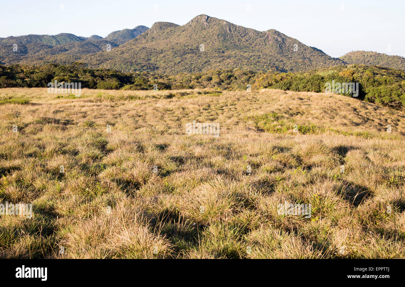 Montane grassland environment Horton Plains national park, Sri Lanka, Asia - Stock Image