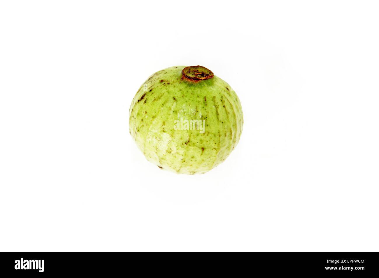 Syzygium longiflorium Myrtaceae - Stock Image
