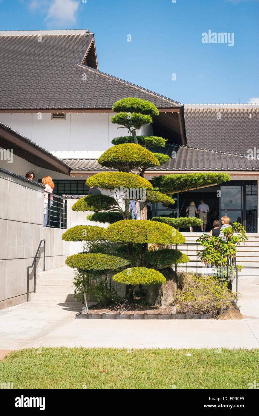 Florida Del Ray Beach Morikami Museum & Park Roji-En Japanese Gardens of Drops of Dew manicured tree rear museum Stock Photo