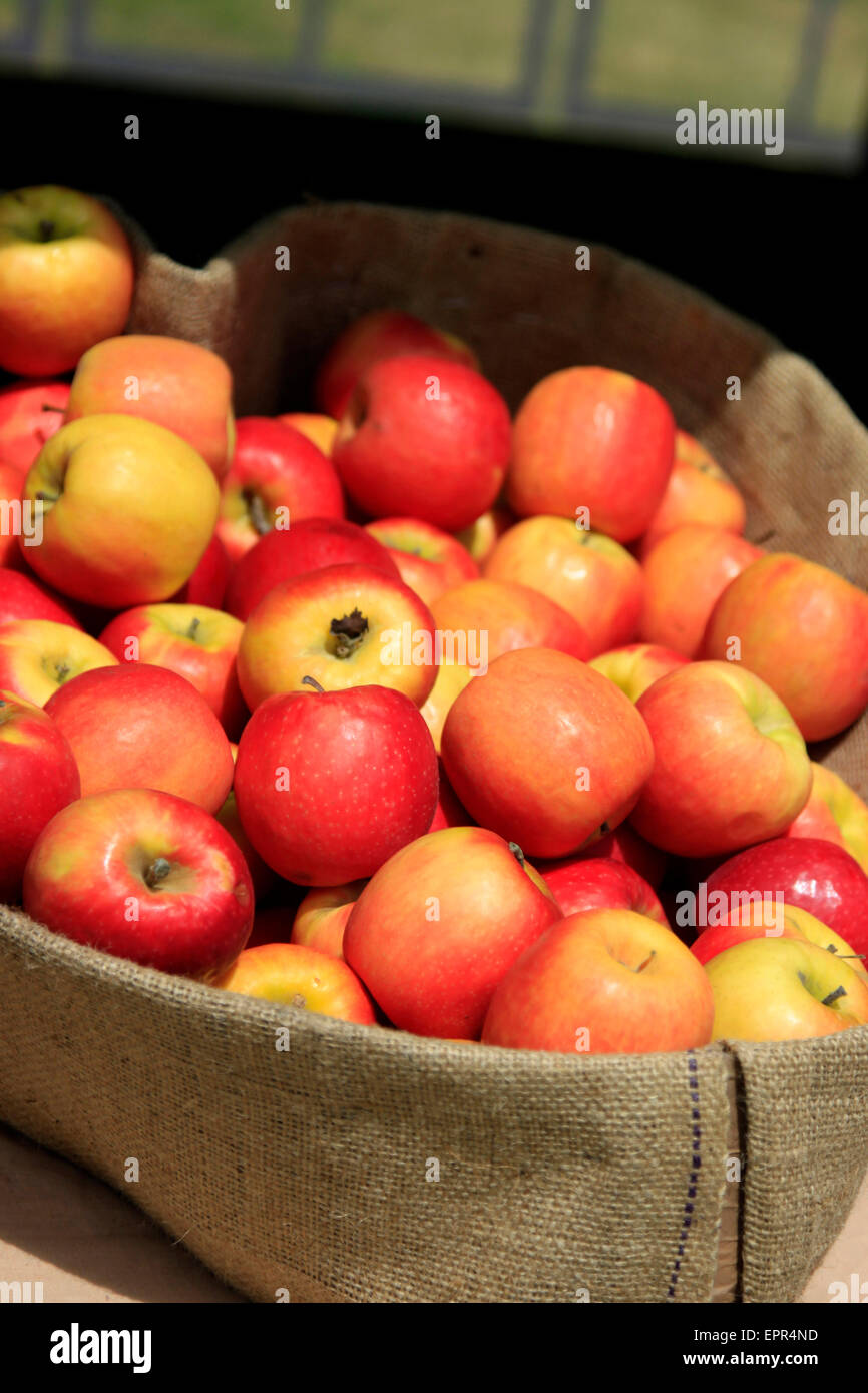 Apples in a greengrocers in Hay on Wye - Stock Image