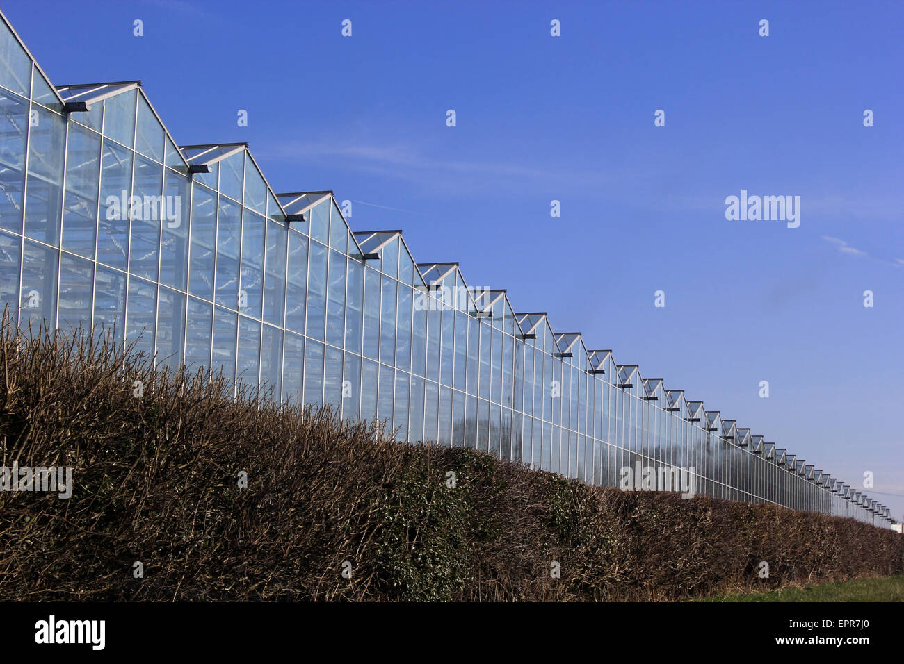 Commercial greenhouses in Llandow, VOG - Stock Image