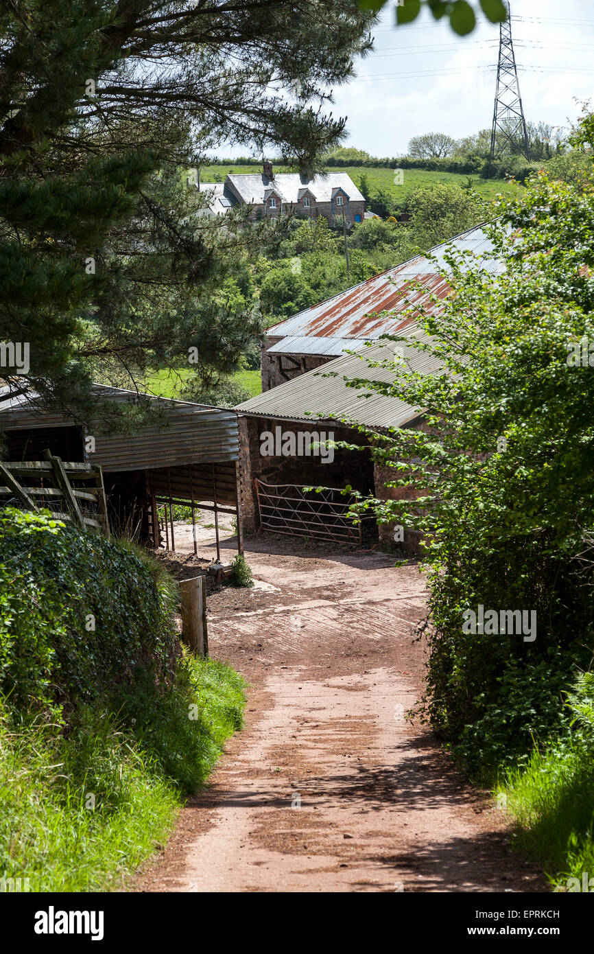 barns for sale in devon lane,flock, sheep, outdoor, meadow, baby