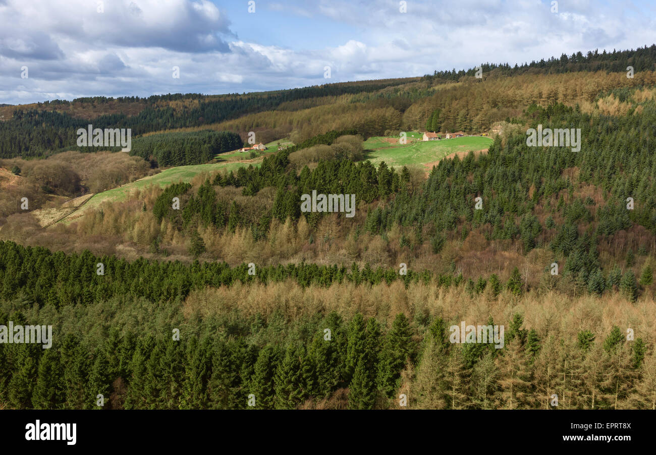 North York Moors National Park with pine woodland flanking farmhouses and fields. - Stock Image