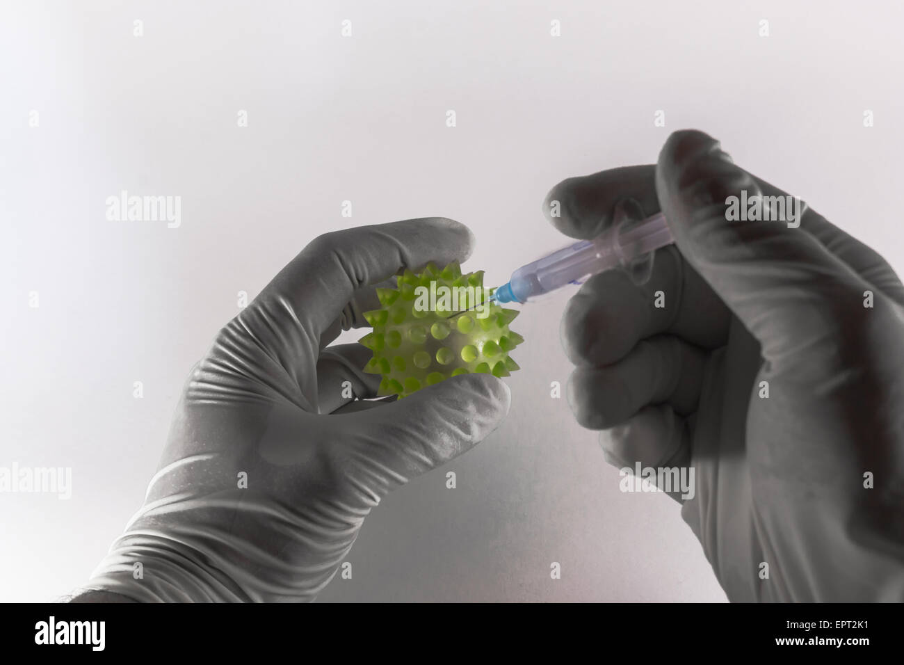Two latex clad hands injecting a hypodermic syringe into a large green virus on white background Stock Photo