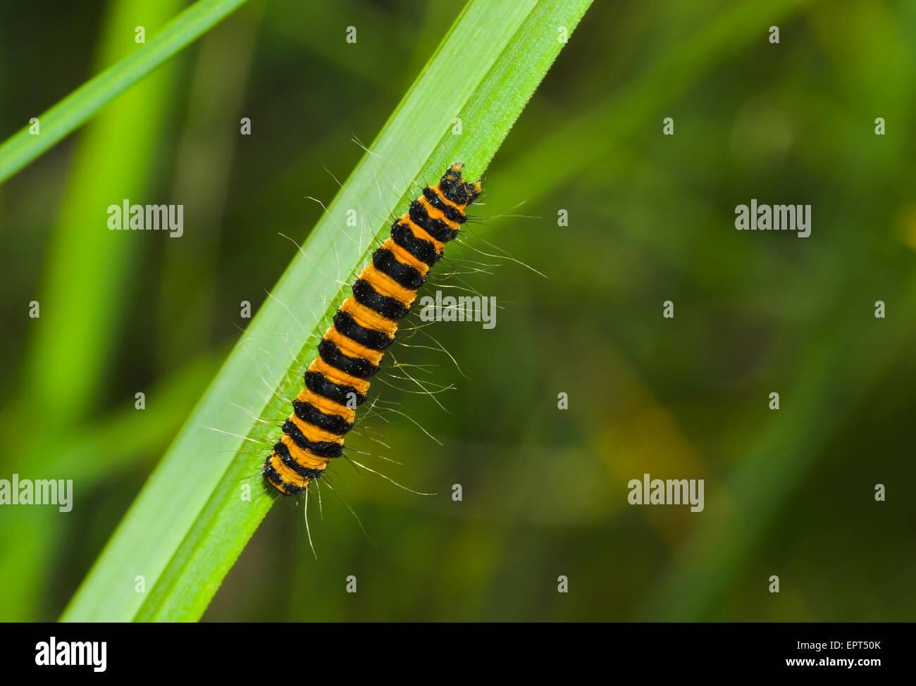 Pokemon green caterpillar orange strip girl haveing