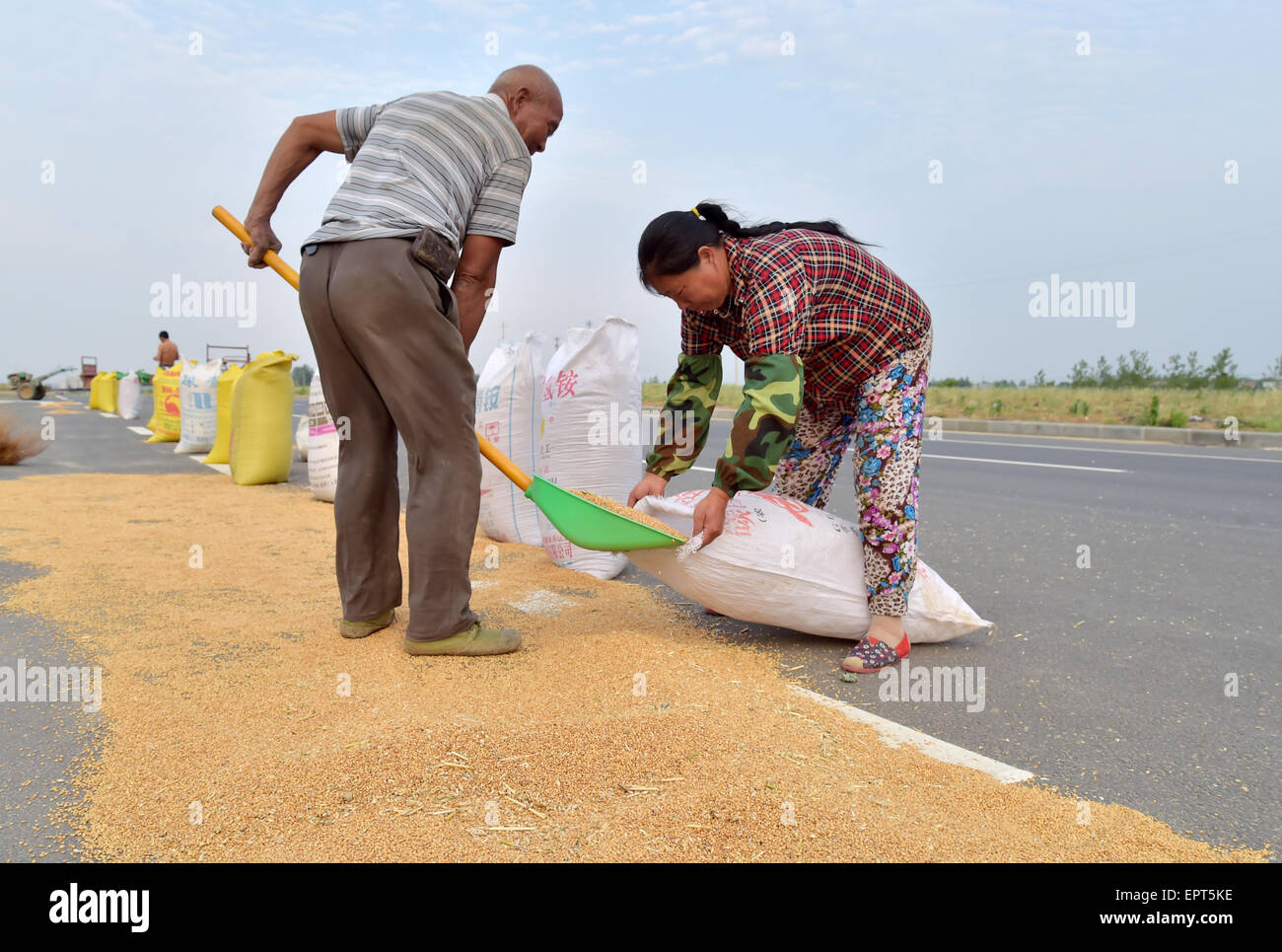 Xiangyang, China. 21st May, 2015. Two farmer labors work in the days of wheat harvest in Xiangyang, Hubei province, - Stock Image