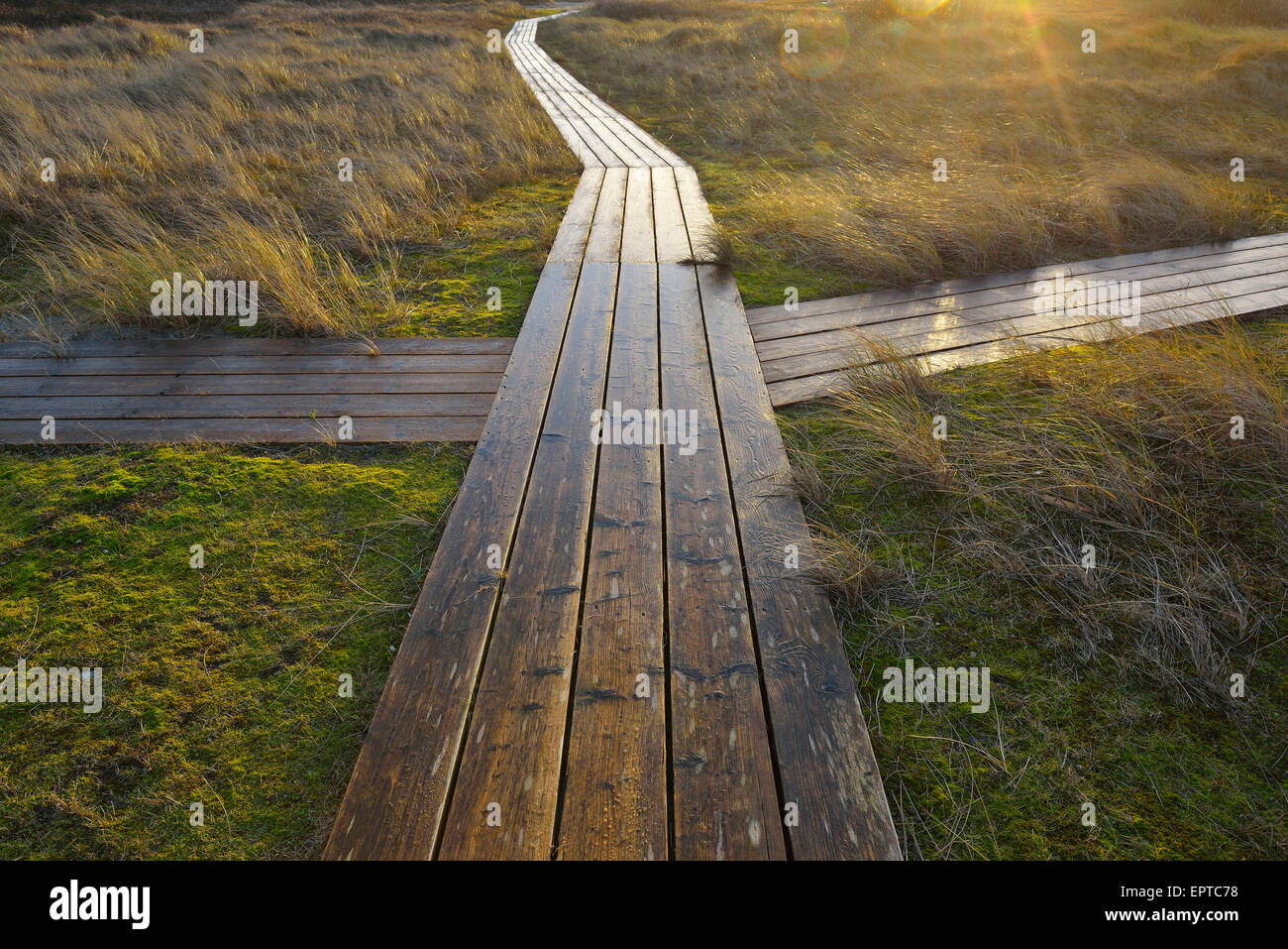 Crossing on Wooden Planks, Boardwalk Path between Dunes, Helgoland, Dune, North Sea, Island, Schleswig Holstein, Stock Photo