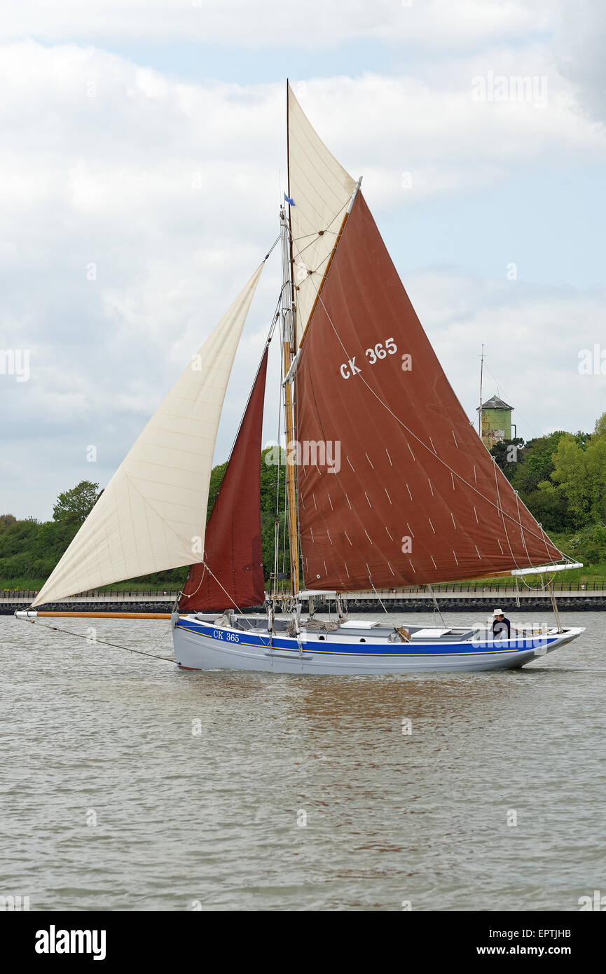 Historic oyster smack CK365 - Transcur - sailing in Harwich Harbour,UK. She is approx.35 feet long and was built - Stock Image