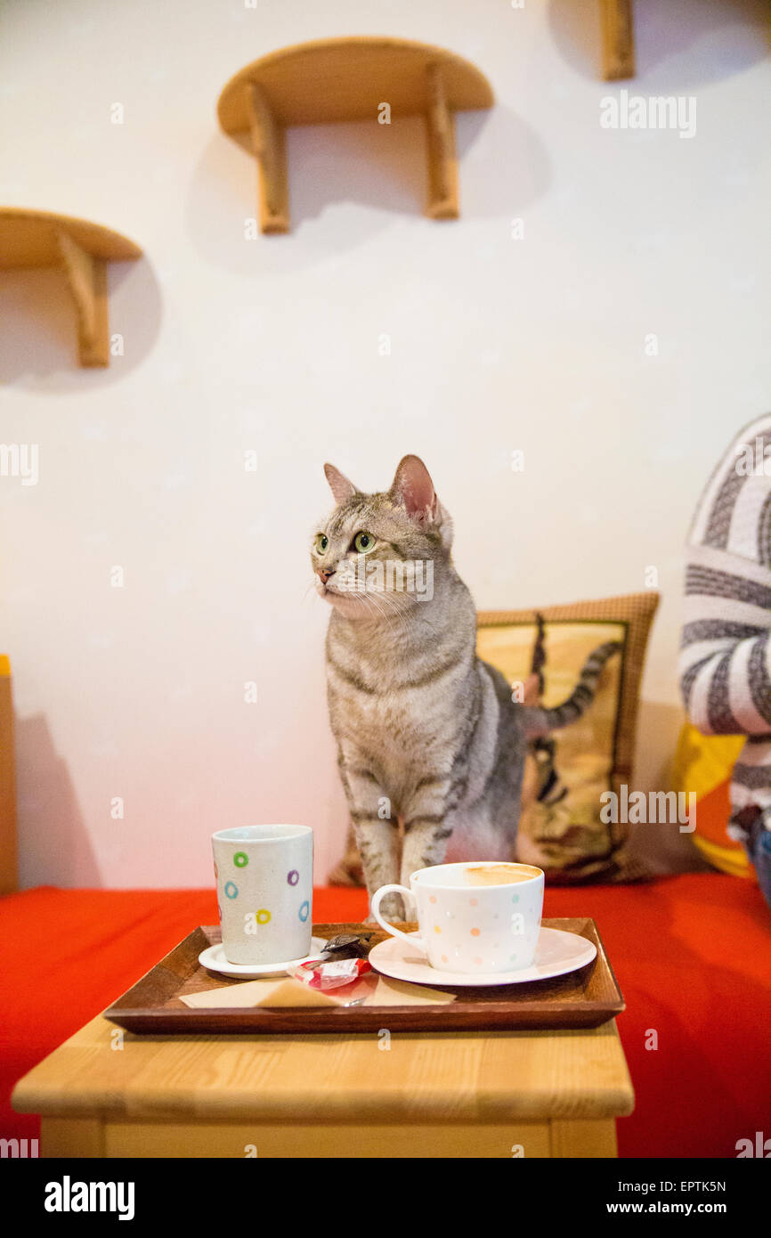 Cat Cafe In Tokyo Stock Photo Alamy