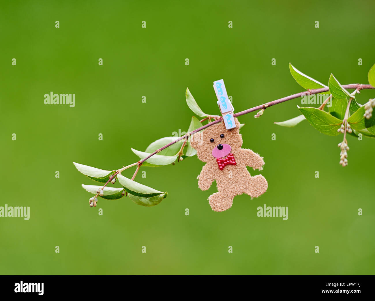 Cute romantic little teddy pegged on a branch in a field - Stock Image