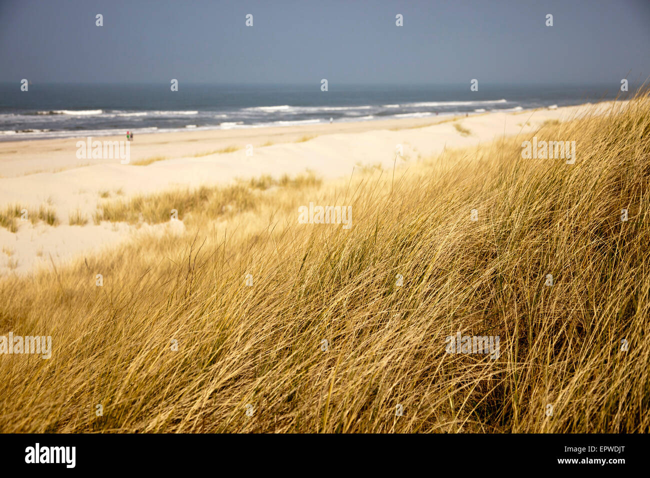 dunes and the main beach, East Frisian Island Spiekeroog, Lower Saxony, Germany Stock Photo