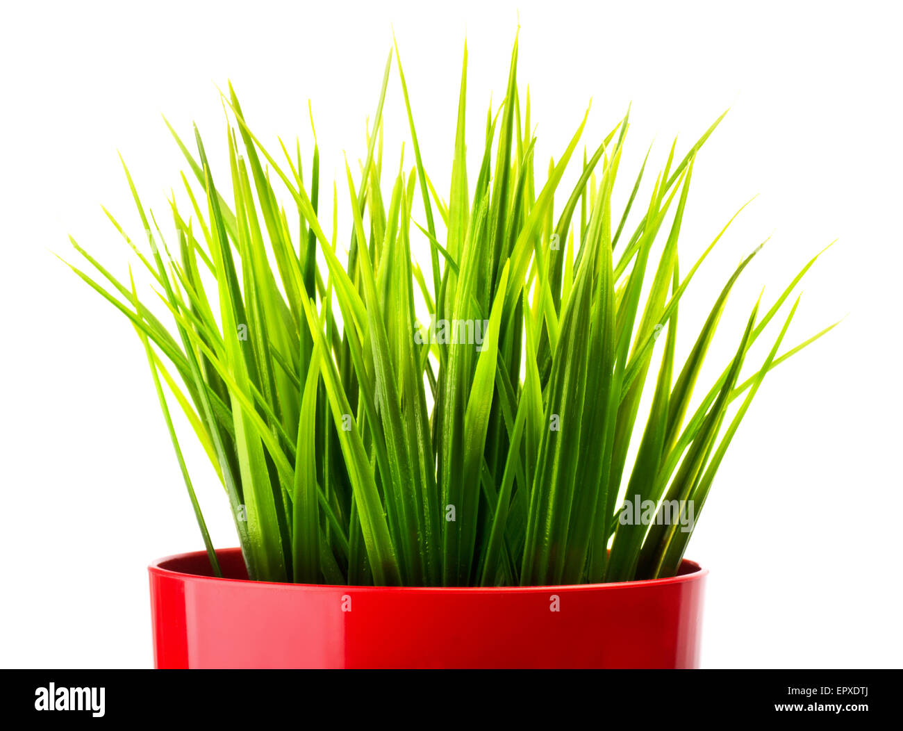 Green grass in a red pot close-up Stock Photo