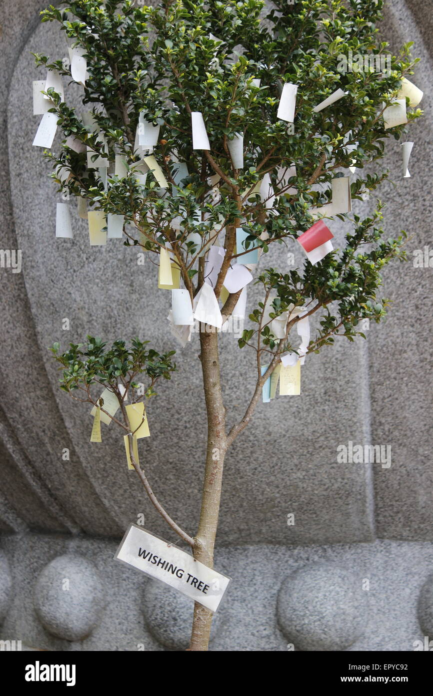 wishing tree at Chinese temple - Stock Image